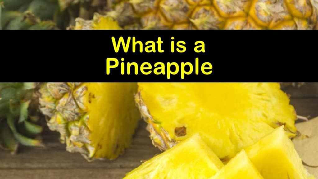 What is a Pineapple titleimg1