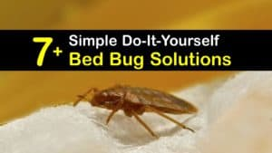 Bed Bug Solutions titleimg1