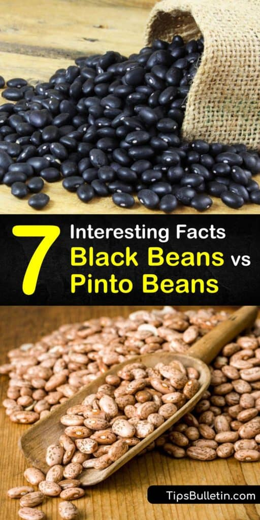 Discover the differences between black beans and pinto beans, their nutritional value, and which ones to use in your favorite Mexican recipes. These legumes are rich in magnesium and potassium, contain no cholesterol, and a great addition to your diet. #difference #black #beans #pinto #beans