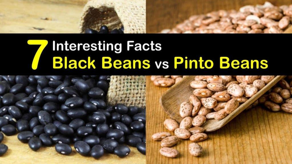 Black Beans vs Pinto Beans titleimg1