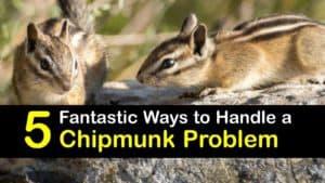 Chipmunk Problem titleimg1