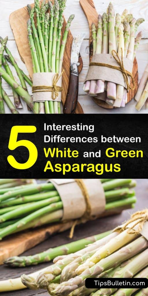 Read this article to find out how photosynthesis and antioxidants change the color of white and green asparagus spears. Find these asparagus season veggies at your grocery store and use the included recipe to turn white spears into a tasty hollandaise dipper. #difference #white #green #asparagus
