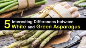 Difference between White and Green Asparagus titleimg1