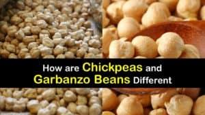 Garbanzo Beans vs Chickpeas titleimg1