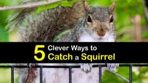 How to Catch a Squirrel titleimg1