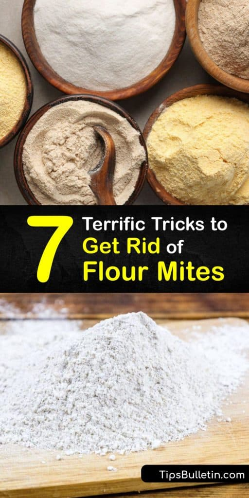 Find out how to eliminate flour mites throughout their life cycle, from eggs and larvae to adults. Store dry foods in airtight containers to prevent mites from reaching their food source. Plus, clean your pantry with bleach, spray a repellent, and vacuum in crevices. #flour #mites #getrid