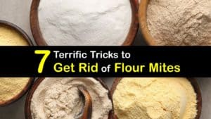 How to Get Rid of Flour Mites titleimg1