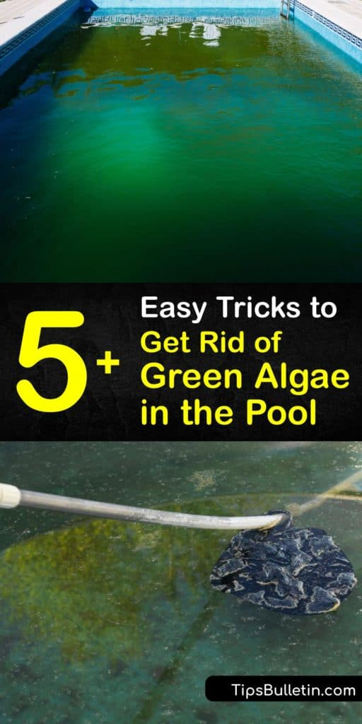 Understand how green algae, mustard algae, black algae, and other pool algae make their way into your water and affect the alkalinity and calcium levels. Use these easy pool maintenance tips to clean your pool water and pool filter and rid them from algae the entire summer. #green #algae #pool