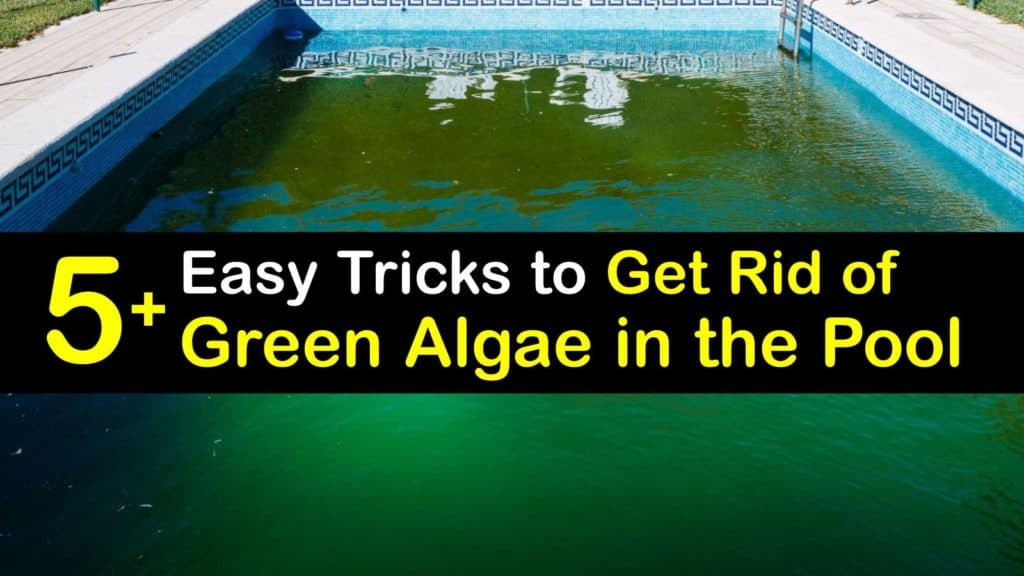 How to Get Rid of Green Algae in the Pool titleimg1