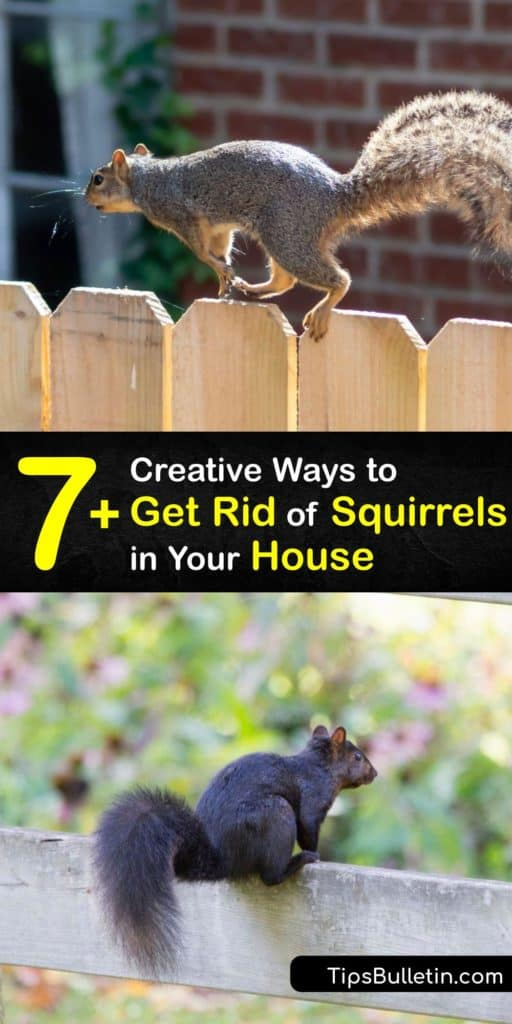 Search your crawl spaces and protect your homes from adult and baby squirrels that turned your eaves into a hotel. Homeowners use this list of squirrel repellent, pest control, live trap ideas, and ways to remove food sources to deter critters that damage their property. #rid #squirrels #house