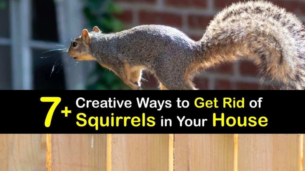 How to Get Rid of Squirrels in Your House titleimg1