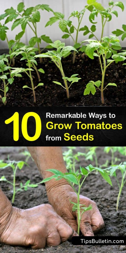 Discover the best seed starting tips for growing your favorite tomato varieties. Whether you're growing heirloom cherry tomatoes or hybrid slicers, transplanting tomato seedlings in your garden is easy with these simple tricks. #grow #tomatoes #seeds #gardening