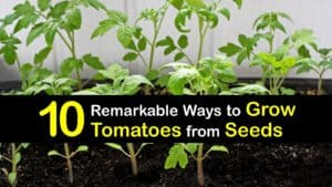 How to Grow Tomatoes from Seeds titleimg1