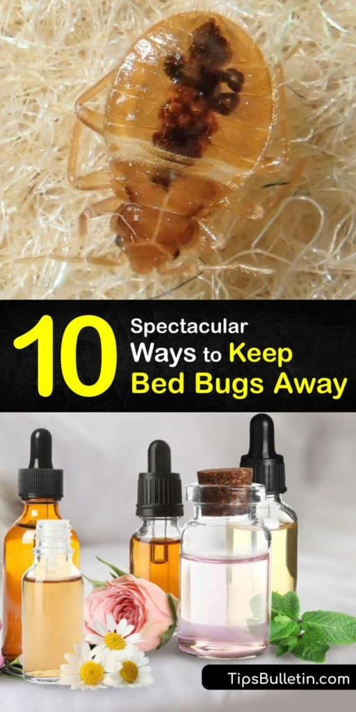 Find out how to repel bed bugs by spraying essential oils on your headboard and in crevices. Wash clothes on high, then store them in a sealed plastic bag. Learn how to identify bed-bug-bites and kill bed bugs, including with pesticides and mattress encasements. #bedbugs #repel #pest #control