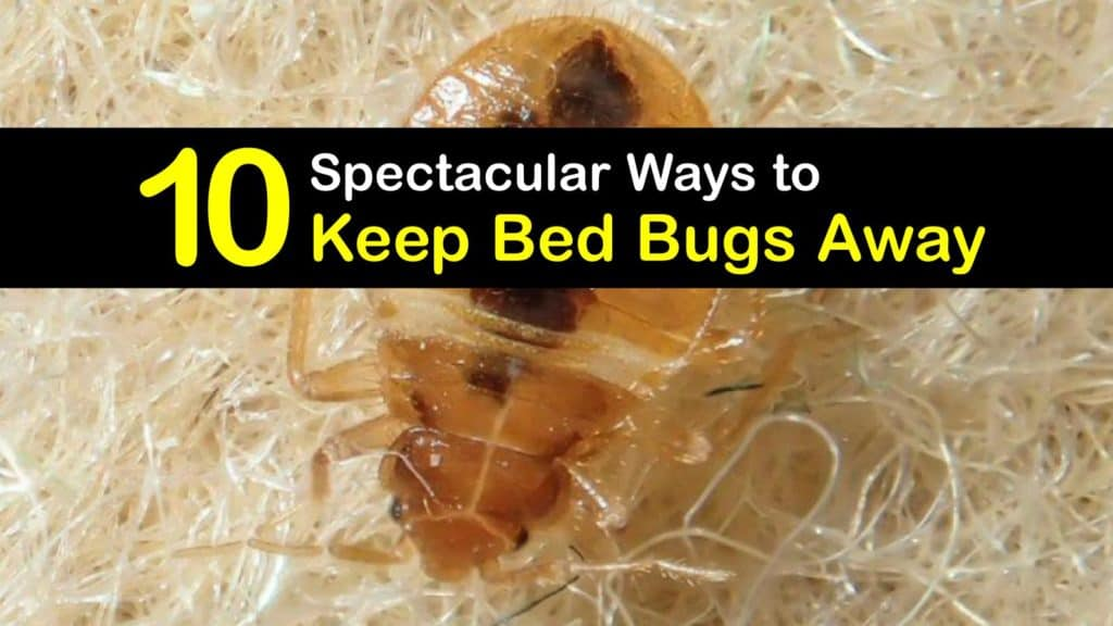 How to Keep Bed Bugs Away titleimg1