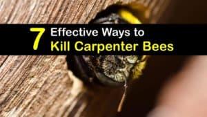 How to Kill Carpenter Bees titleimg1