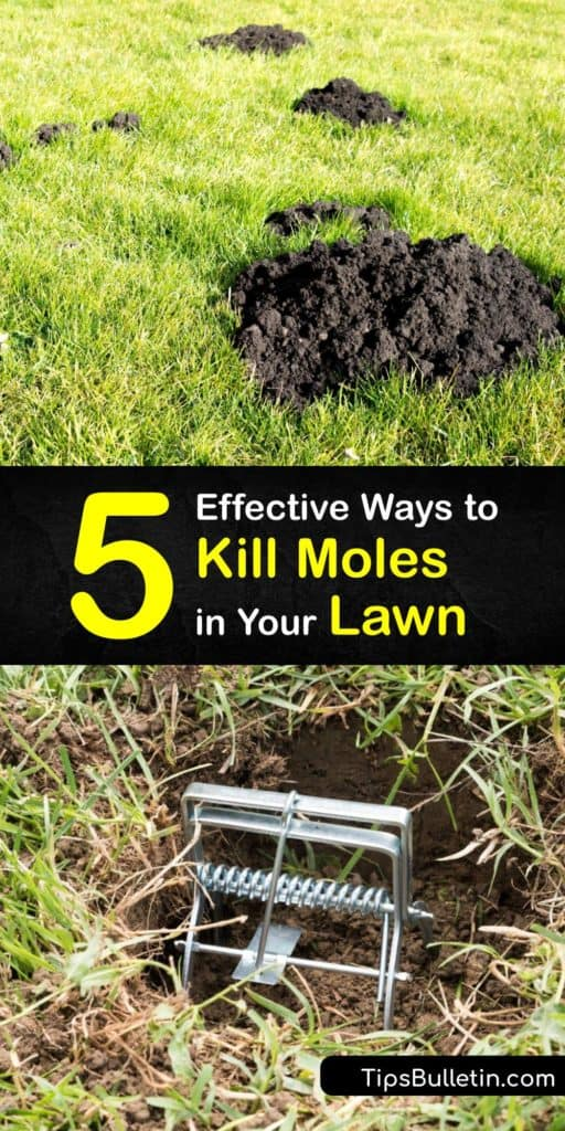 Learn how to get rid of moles in your garden and yard by using a mole trap, homemade mole killer, and preventative methods. These critters ruin lawns by tunneling in search of a food source such as earthworms and it's essential to take measures to stop mole activity. #howto #getridof #moles #lawn