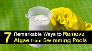 How to Remove Algae from a Swimming Pool titleimg1