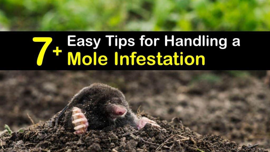 Mole Infestation titleimg1