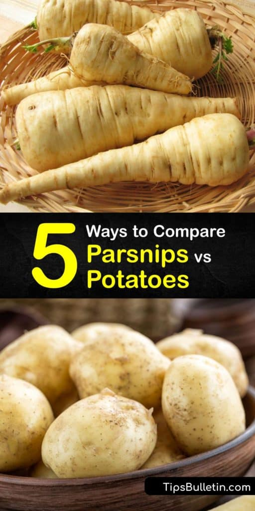 Gain significant health benefits and learn the difference between parsnips, potatoes, and turnips after reading this article. Discover how parsnips are packed with folate, vitamin C, and potassium compared to starchy potato dishes with lots of carbs that damage cholesterol. #parsnips #vs #potatoes