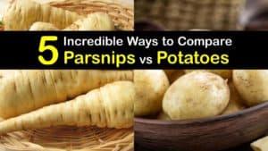 Parsnips vs Potatoes titleimg1