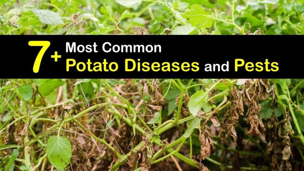 Potato Diseases titleimg1