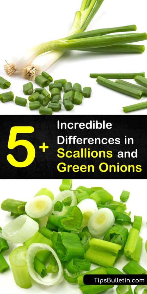 Discover the flavor and nutritional value of green onions vs scallions, and ways to use them in recipes. Chives, spring onions, leeks, green onions, and scallions are all popular ingredients in Asian cooking and a garnish for a variety of side dishes. #difference #scallions #green #onions