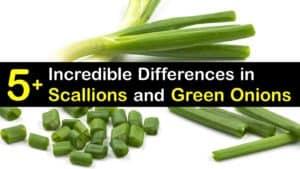Scallions vs Green Onions titleimg1