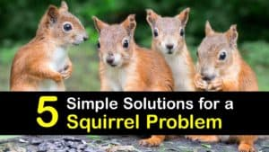 Squirrel Problem titleimg1