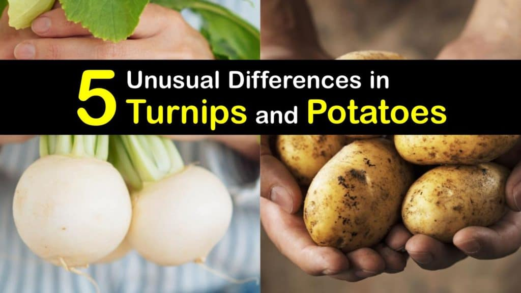 Turnips vs Potatoes titleimg1