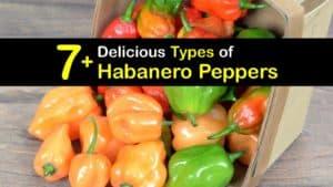 Types of Habanero Peppers titleimg1