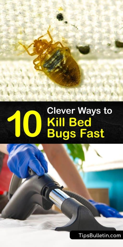 Learn how to treat a bed bug infestation quickly without calling an exterminator. Try vacuuming or using a steam cleaner on bed bug hiding places like the bed frame, box spring, and baseboards. If necessary, use pesticides or involve pest control. #bedbugs #fast #getridof