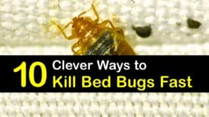 Ways to Kill Bed Bugs Fast titleimg1