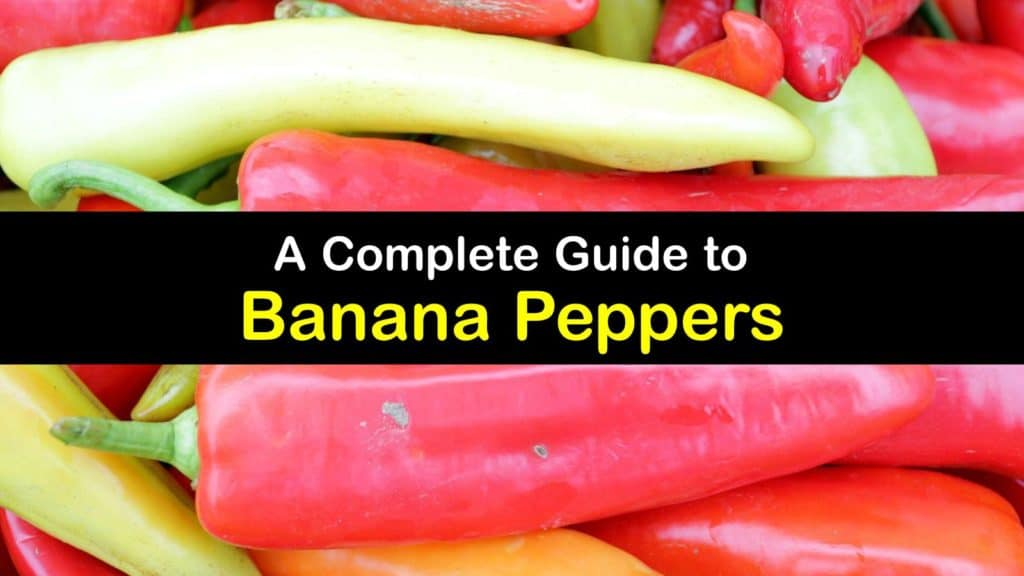 What are Banana Peppers titleimg1