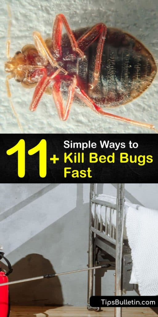 Instead of hiring pest control, learn DIY ways to kill bed bug adults and bed bug eggs. The insects hide in your bed frame, box spring, and baseboards. Using products like rubbing alcohol or diatomaceous earth instead of pesticides and insecticides kill bed bugs quickly. #howto #getridof #bedbugs