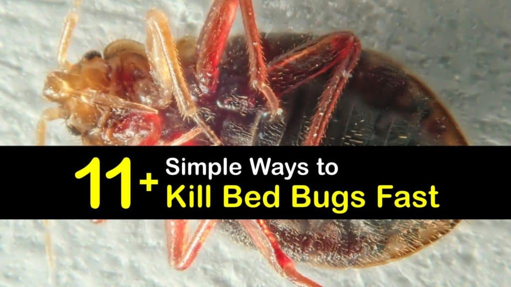What Kills Bed Bugs Instantly titleimg1