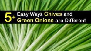 Chives vs Green Onions titleimg1