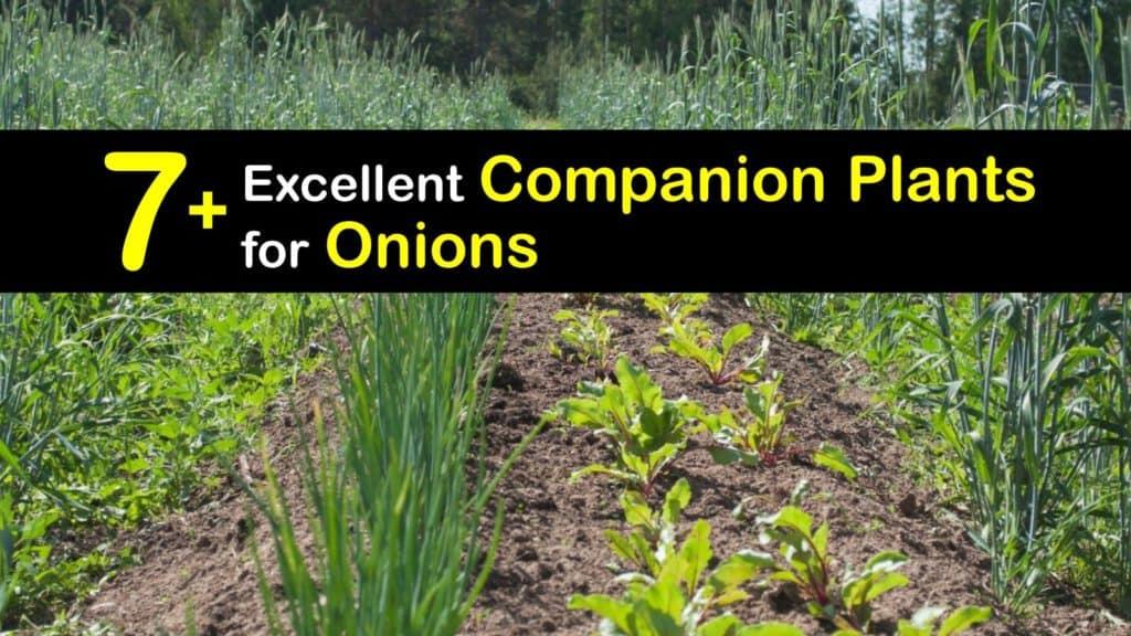 Companion Planting Onions titleimg1