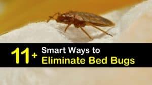 How to Eradicate Bed Bugs titleimg1