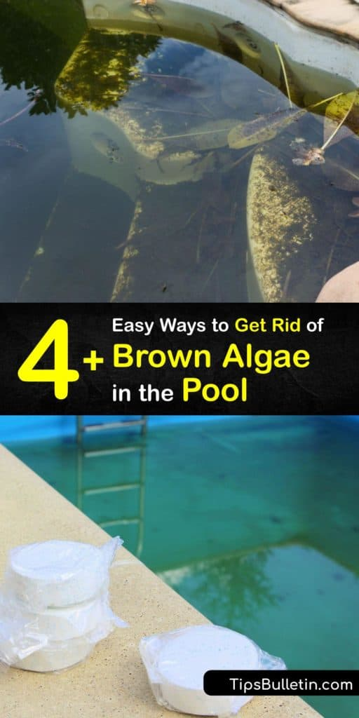 Learn how to get rid of brown algae from the pool. There are many types of algae, from yellow and green algae to brown and black algae. It's vital to use a sanitizer to balance the pool water chlorine levels to prevent algae growth. #howto #getridof #pool #algae #brown