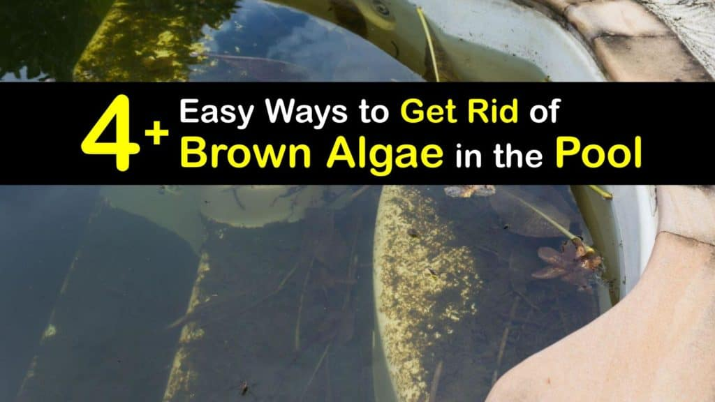 How to Get Rid of Brown Algae in the Pool titleimg1
