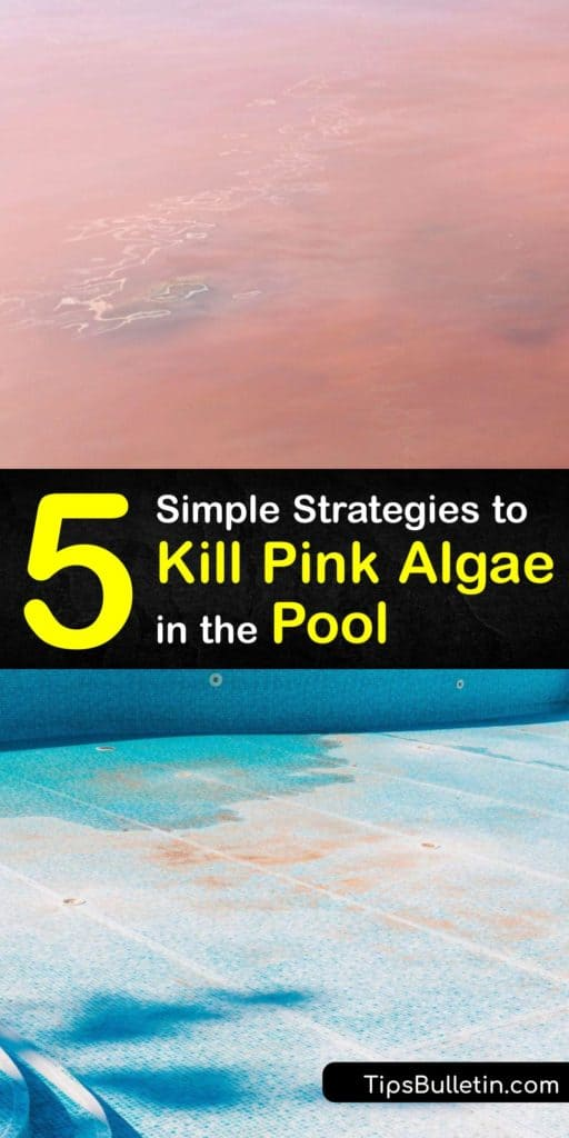 Keep your pool water free from pink slime, black algae, and other algae growth. Start by checking your chlorine level and alkalinity, backwash the filter, and use a skimmer and vacuum to rid your water from pink algae and make it safe to swim in again. #pink #algae #pool #getridof