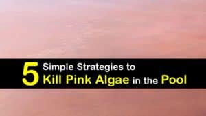 how to get rid of pink algae in the pool titleimg1