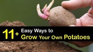 How to Grow Potatoes titleimg1