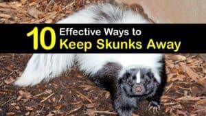 How to Keep Skunks Away titleimg1