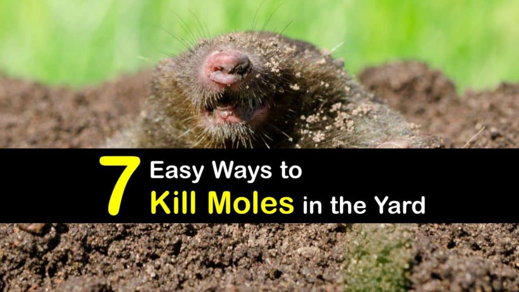 How to Kill Moles titleimg1