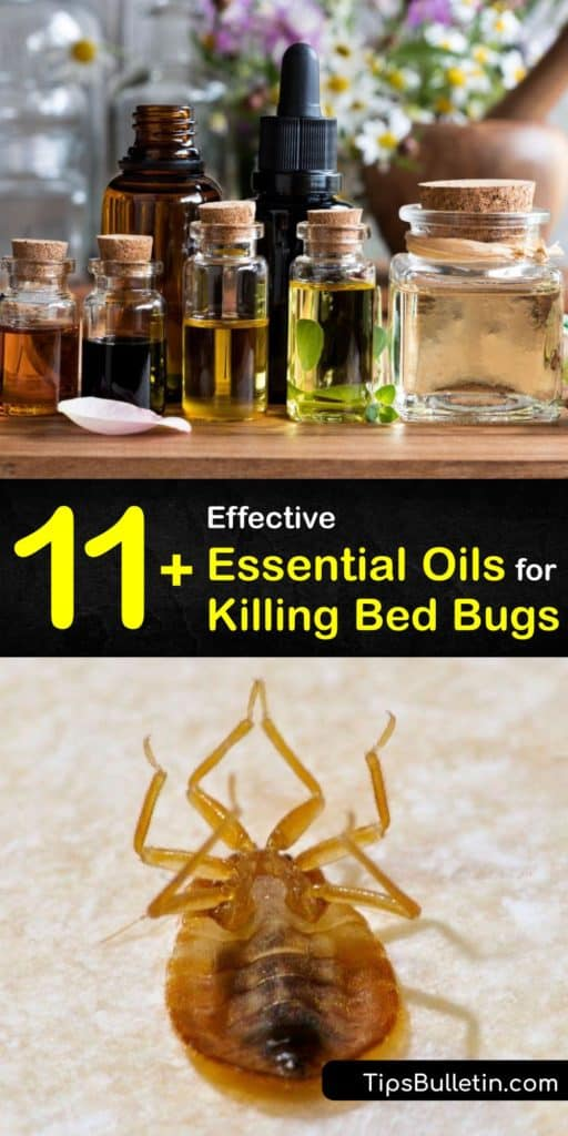 Smell pleasant oils like lemongrass, eucalyptus, and peppermint oil and learn how to use them as a repellent to fight a bed bug infestation instead of calling pest control. These oils work to prevent bed bug bites and act as an insecticide and pesticide. #essential #oils #bedbugs #getridof