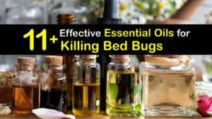 How to Use Essential Oils for Bed Bugs titleimg1