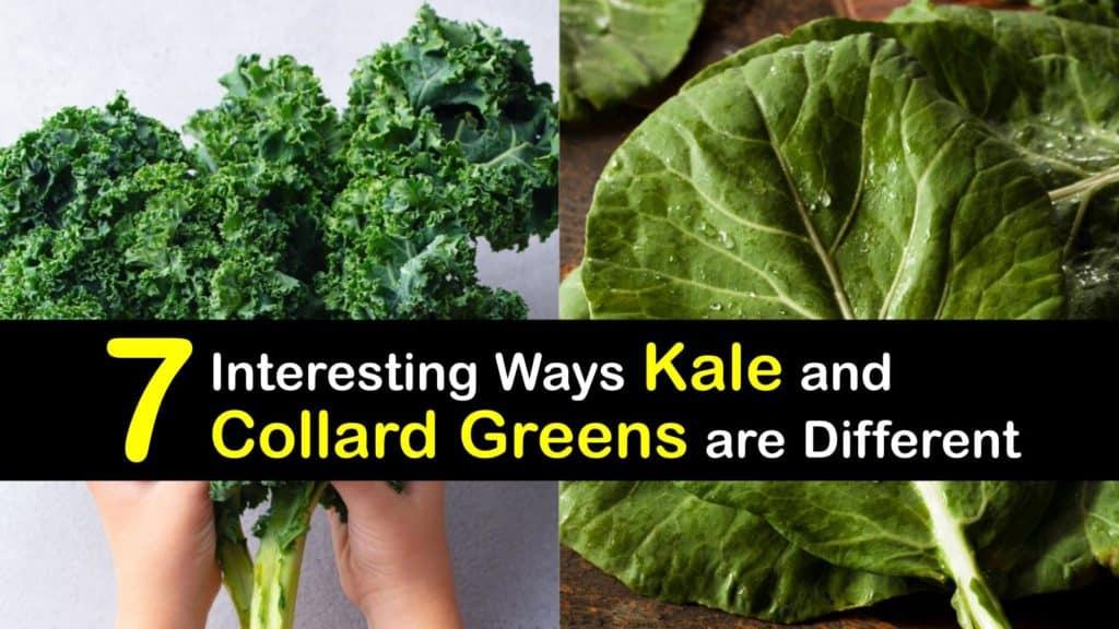 Kale vs Collard Greens titleimg1