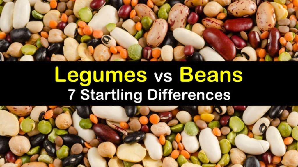 Legumes vs Beans titleimg1